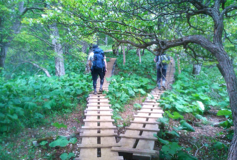 檜洞丸の木道