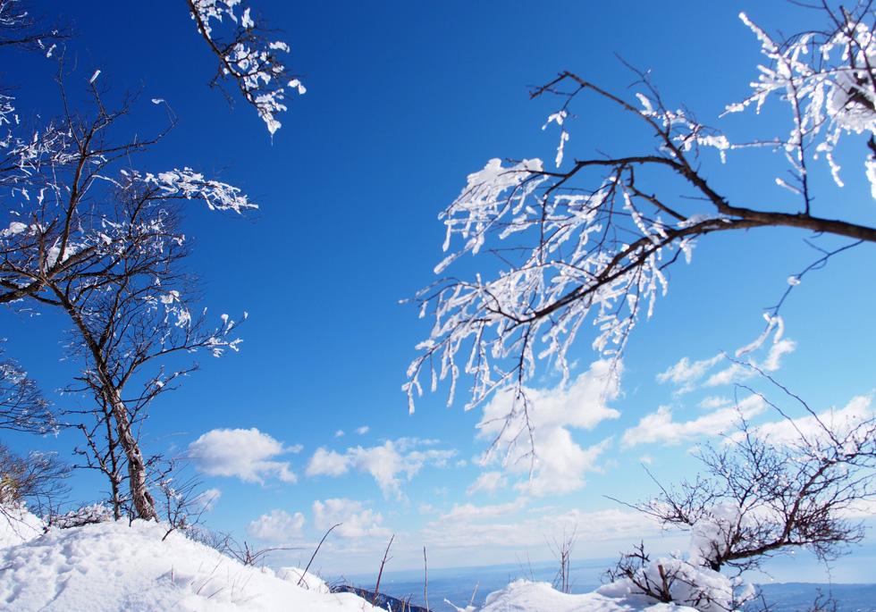 雪の塔ノ岳 頂上付近の樹氷