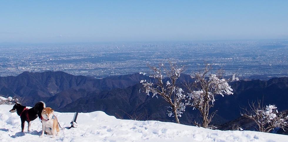 雪の塔ノ岳山頂とワンコ