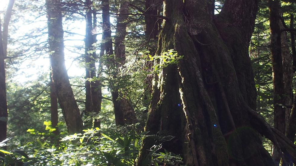 一ノ沢の深い森