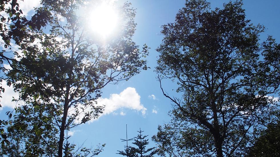 一ノ沢の森から青い空を眺める