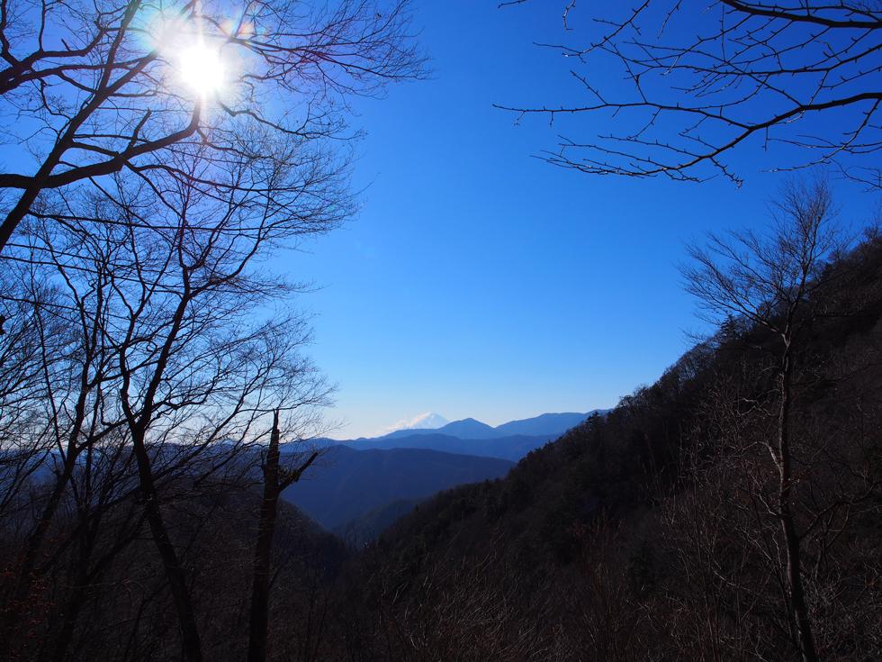 雲取山登山道から富士山を見る