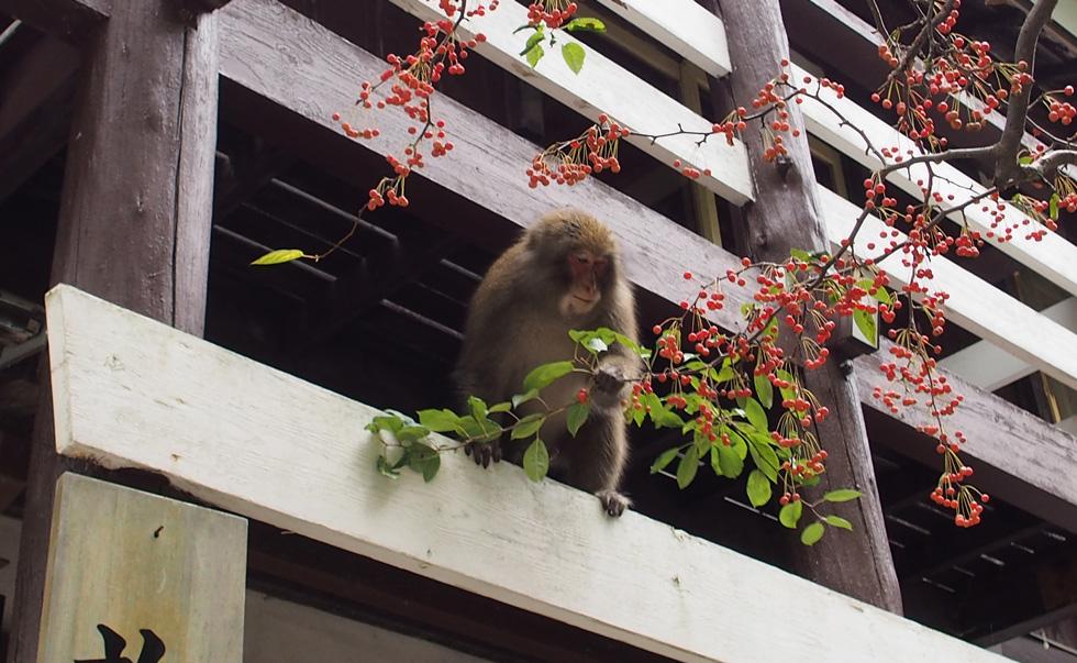 上高地の明神で猿に会う