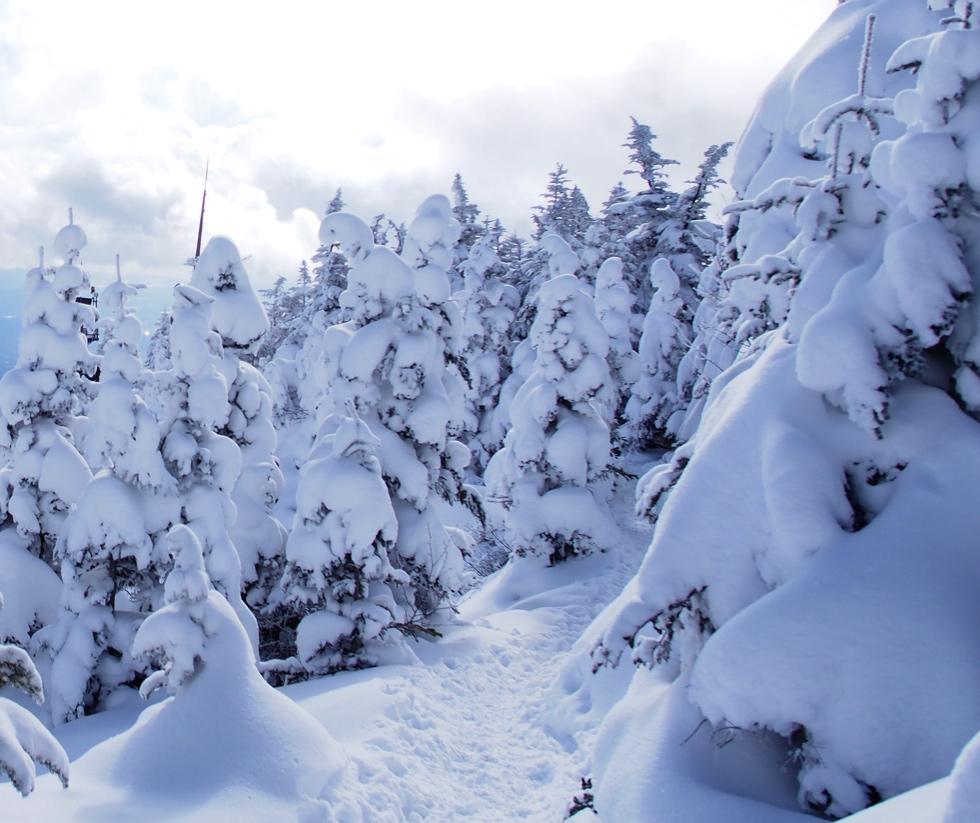 黒斑山の森
