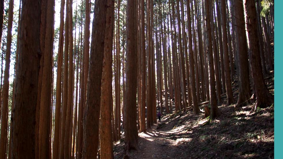 雲取山の森