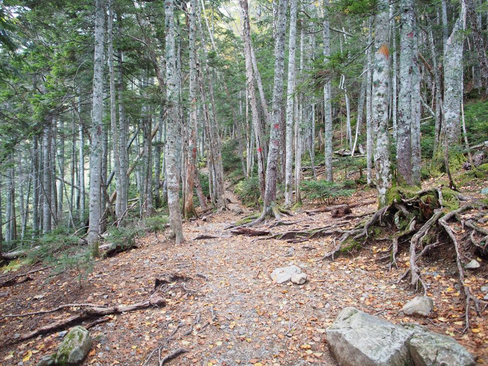 北岳の深い森