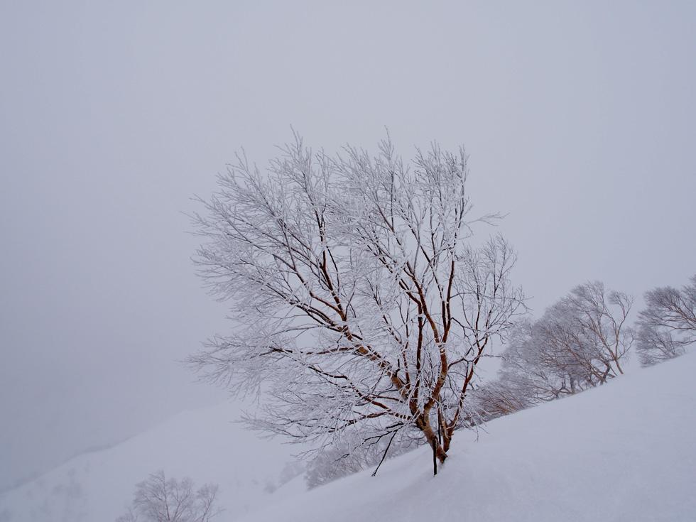 谷川岳の樹氷