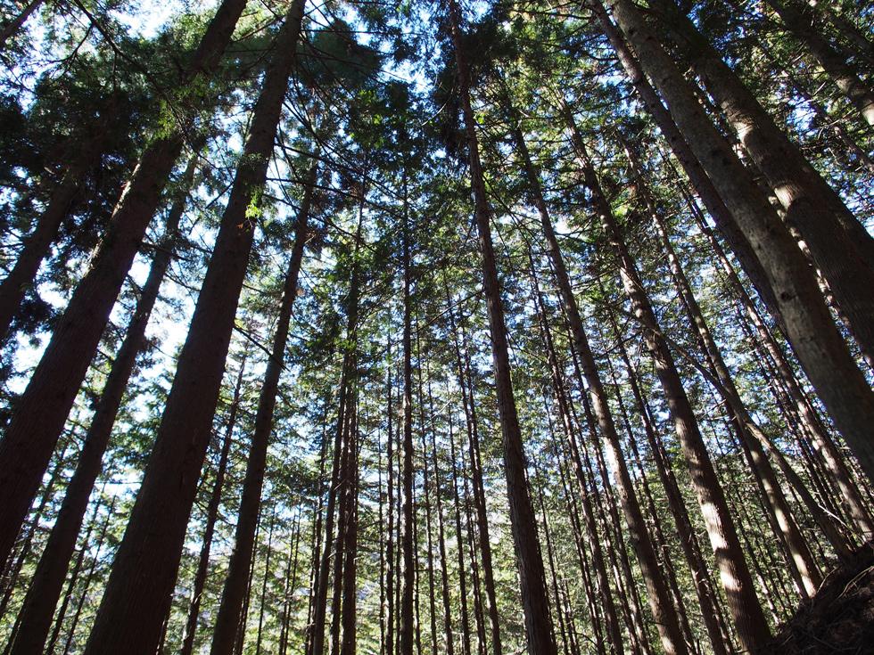 滝子山の森