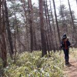 雪の権現岳に登る 1泊2日テント泊(天女山~三ツ頭~権現岳)