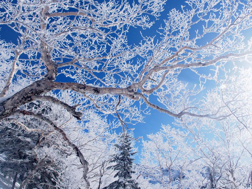 樹氷と八ヶ岳ブルー