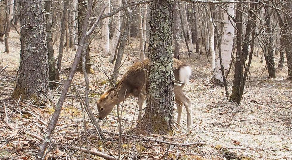 乾徳山で鹿ちゃんに遭遇