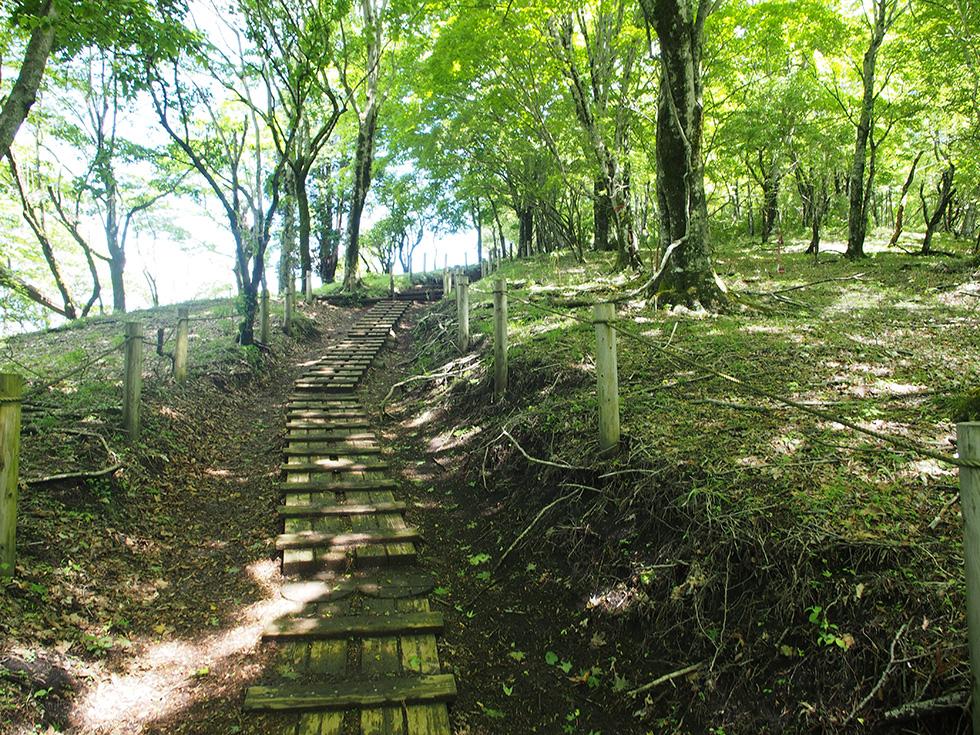鍋割山への尾根道