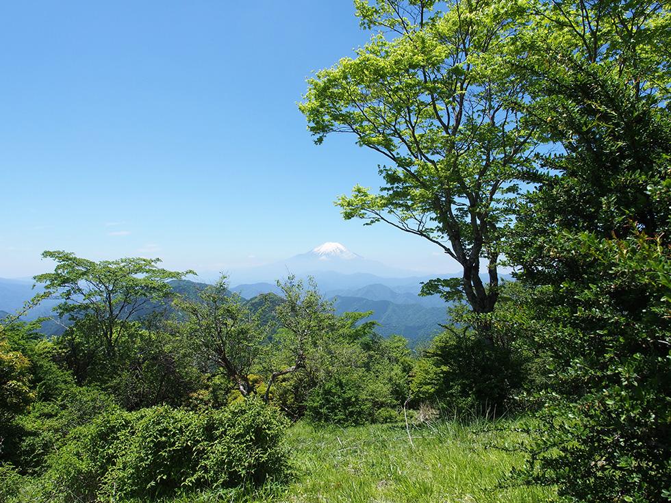 鍋割山から見る富士山