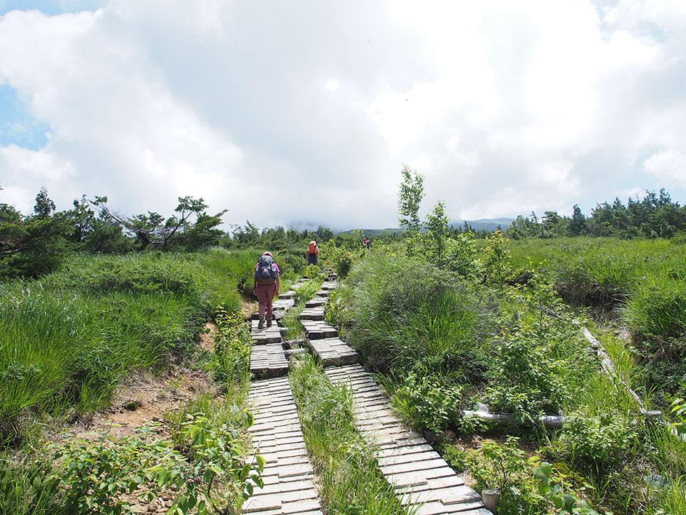 折立から太郎平小屋に向けて長い木道が続く。