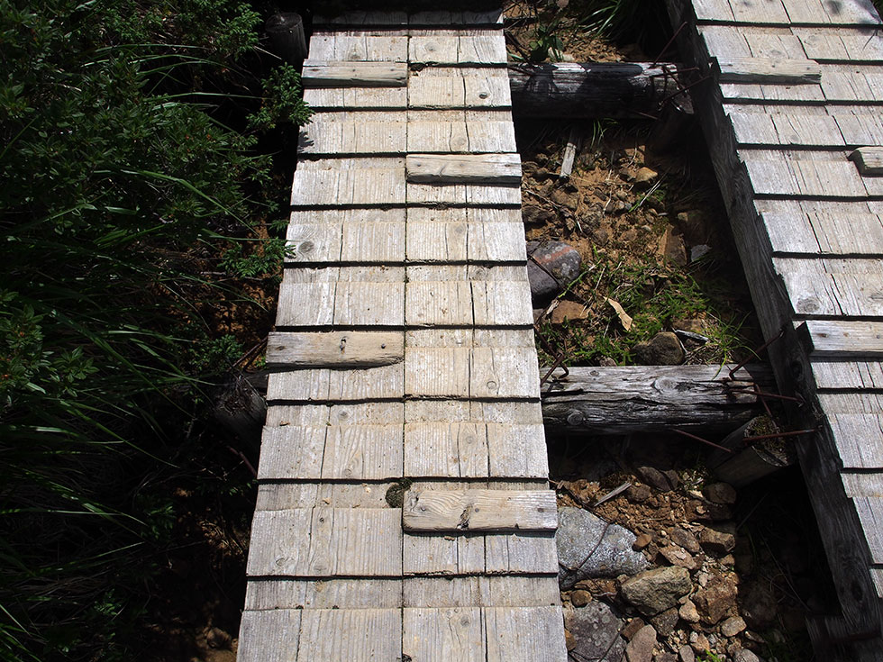 折立からの木道は歩きやすい