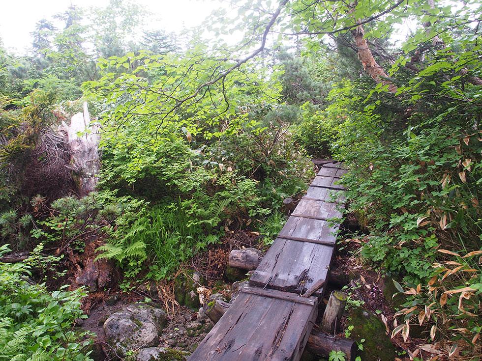 雲ノ平急登後、木道が現れた!