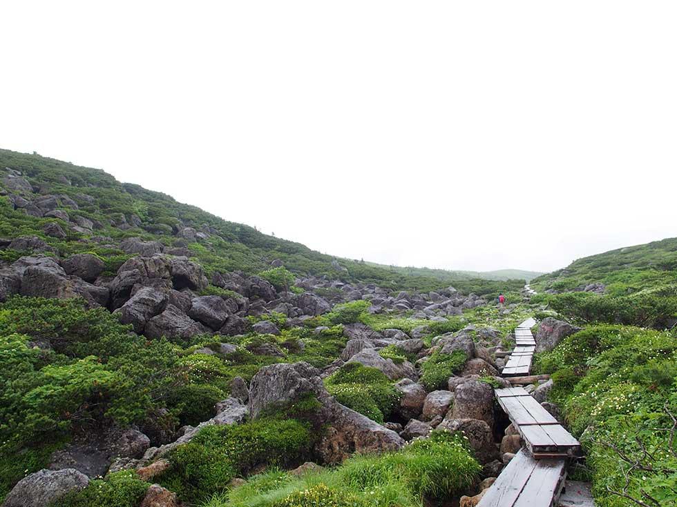 アラスカ庭園から雲ノ平山荘へ向かう