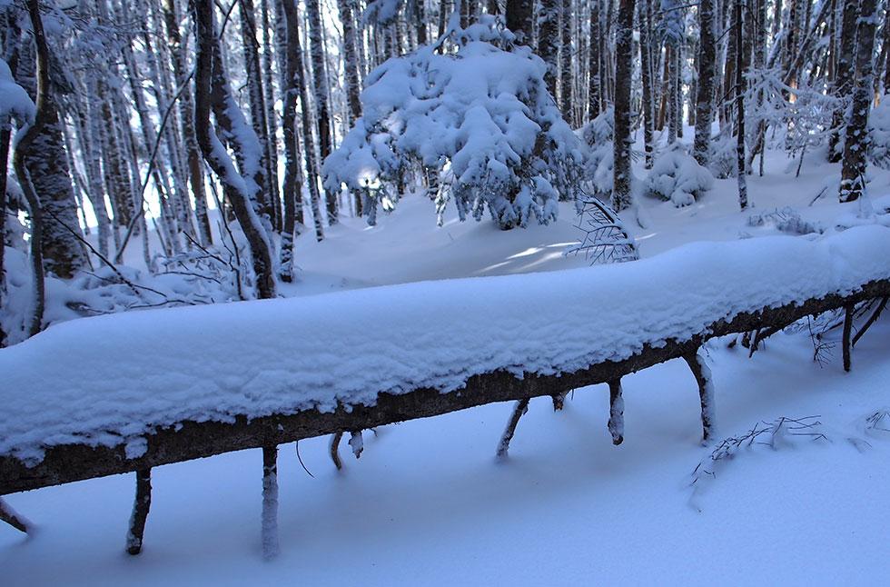 雪の八ヶ岳 南沢