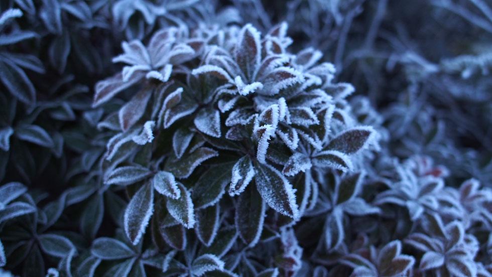 早朝の塔ノ岳山頂は凍っていた
