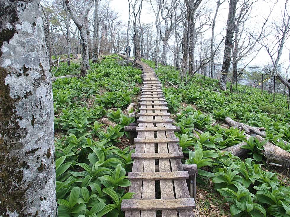 檜洞丸山頂付近の木道