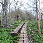 西丹沢の盟主、飴と鞭の「檜洞丸」に久しぶりに登ってきた