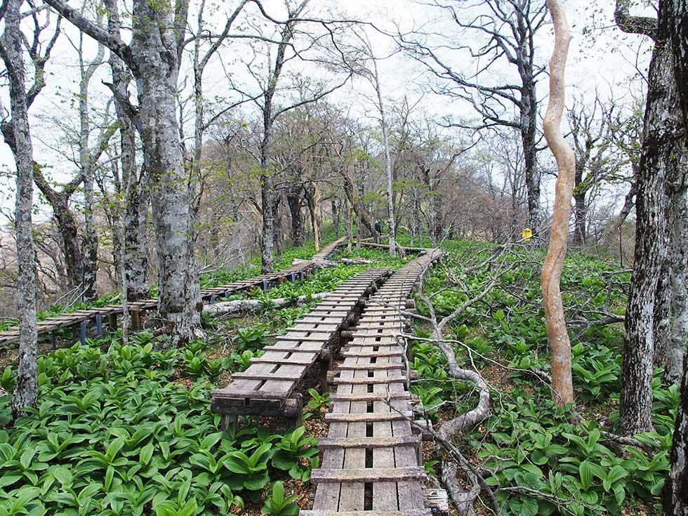 西丹沢の檜洞丸