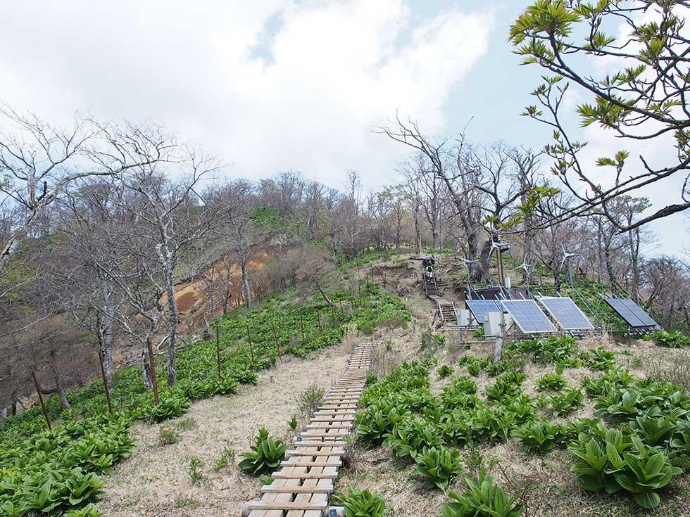 西丹沢の檜洞丸の木道