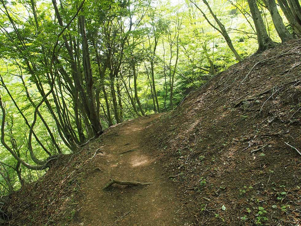 檜洞丸 下山道