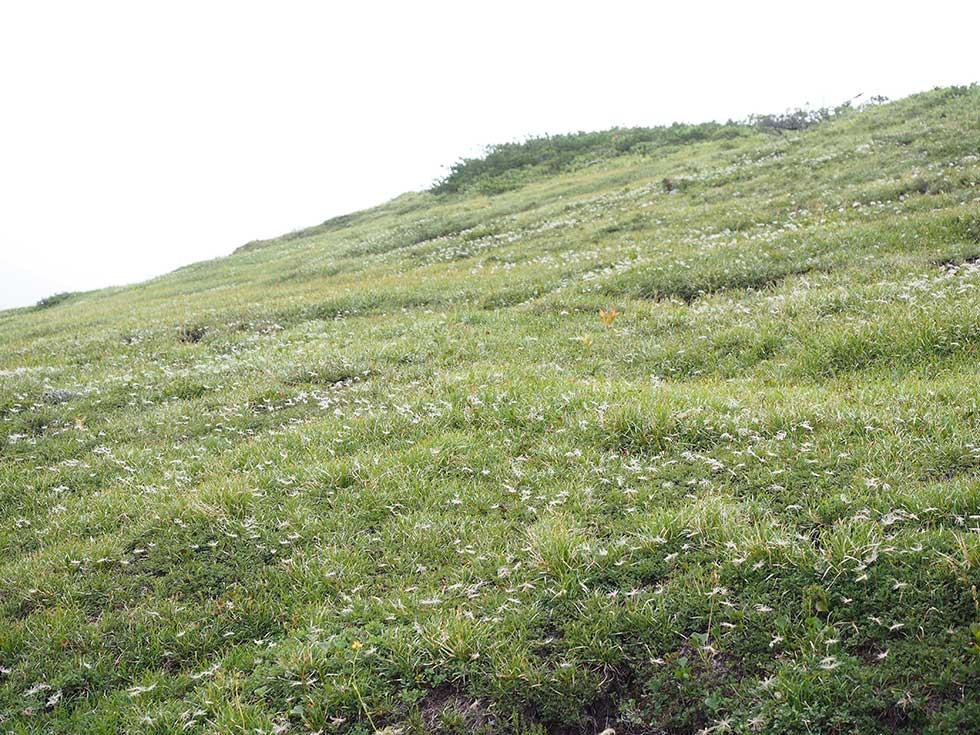 太郎坂で見た高山植物