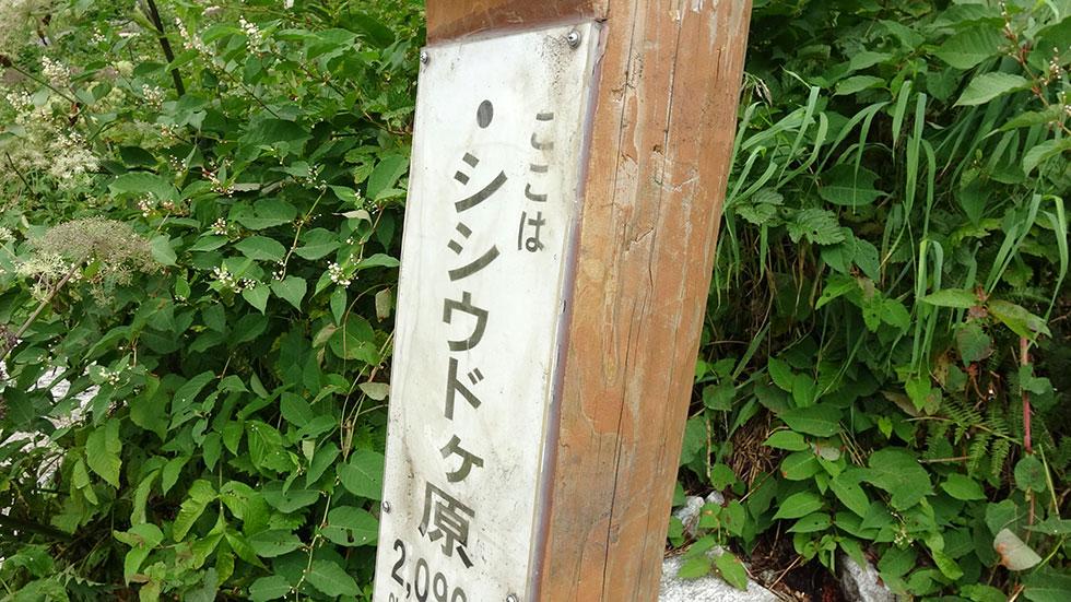 新穂高温泉へ下山する シシウドヶ原