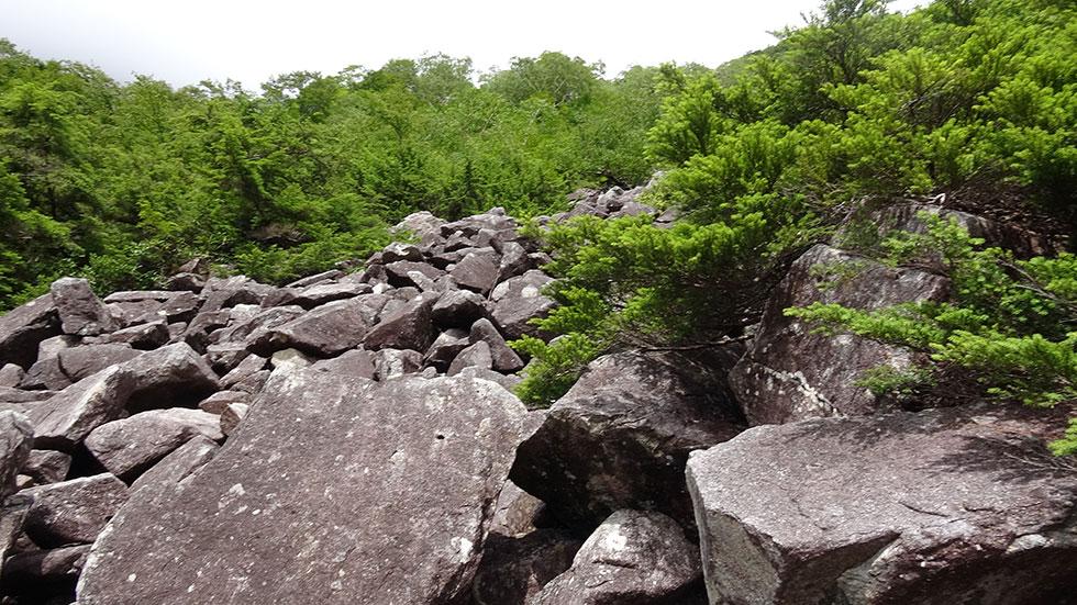 新穂高温泉へ下山する 小池新道 チボ岩