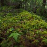 雨の北八ヶ岳「白駒池」の苔の森が素敵だった1泊2日テント泊