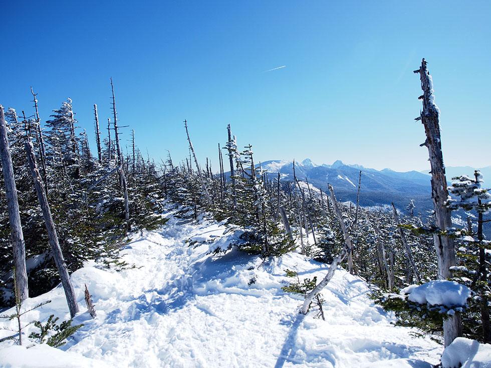 雪の縞枯山